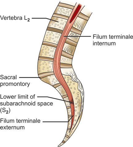 Jaypeedigital Ebook Reader Filum terminale or terminal thread is a fragile fibrous tissue strand which is the longitudinal support of the spinal cord. jaypeedigital ebook reader