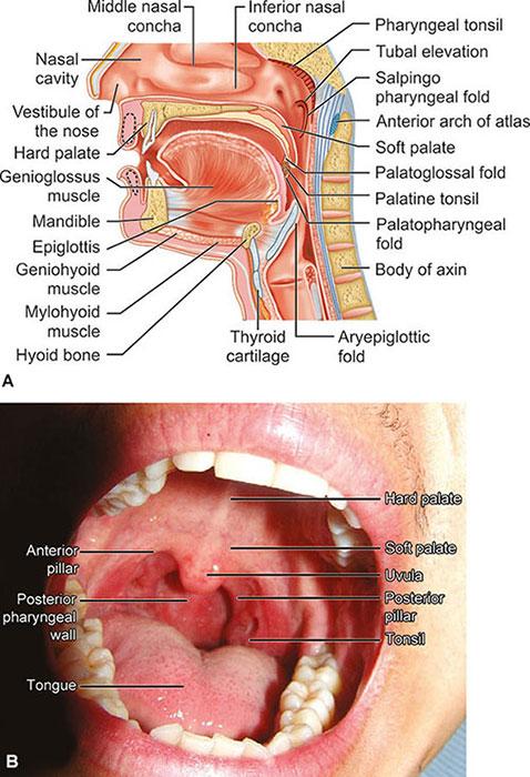 tonsillitis hipertónia típusú gyógyszerek magas vérnyomás ellen