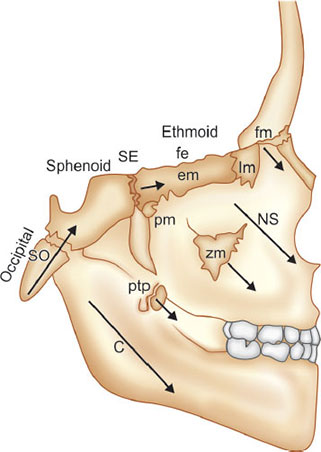 Synchondrosis Cranial Base / The cranial base synchondroses are important growth centers of the craniofacial skeleton.